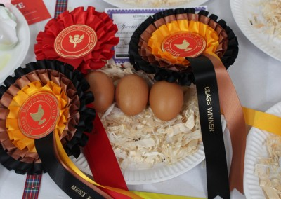 Best Eggs at the Scottish National Poultry Show 2016